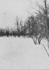 LNTI 2.43 L.N. Tolstoï se promenant dans la neige