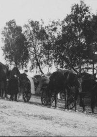 LNTI 2.52 L.N. Tolstoï à la campagne