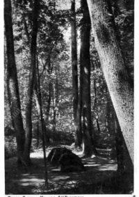 LNTI 3.23 La tombe de L.N. Tolstoï